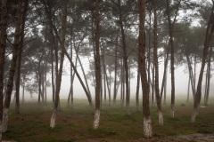 miseenscene-photography-land-space-011
