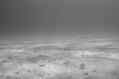 miseenscene-photography-monochrome-005