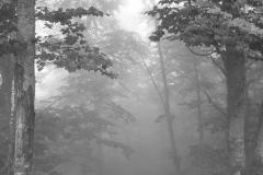 miseenscene-photography-monochrome-006