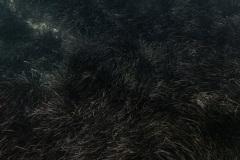 miseenscene-photography-summer-dream-010